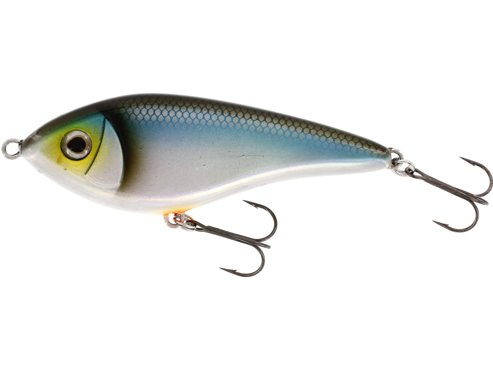 Swim Blueback Herring